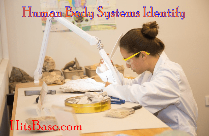 Human Body Systems Identify